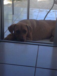 Huntsville Family Divorce Lawyer Dog